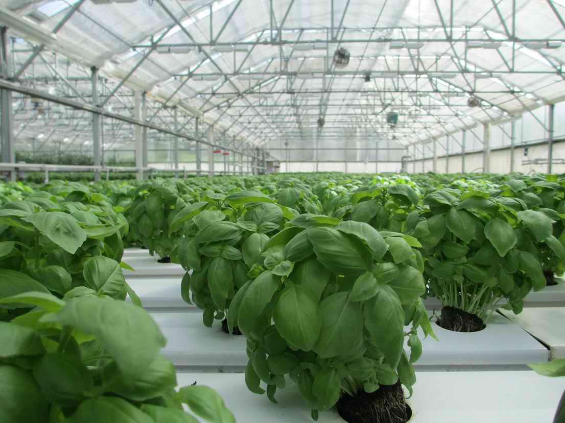 Growshop Gewächshaus Homebox