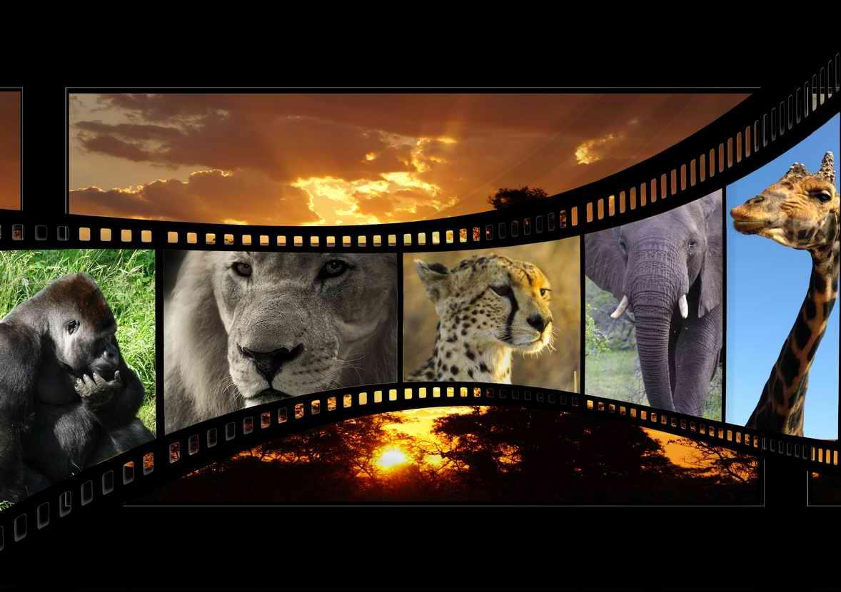 Videobearbeitung mkv Software